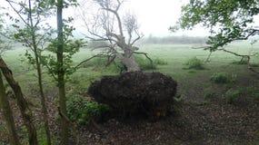 Bosbouw bij zijn natuurlijkst, een de lenteochtend in Essex 7 stock afbeelding
