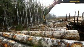 bosbouw De mening over registreerapparaat maakt timmerhout in bos leeg stock videobeelden