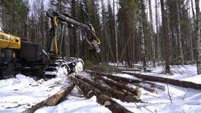 bosbouw De mening van registreerapparaat laadt boomstammen in bos stock video