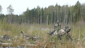 Bosbouw houten monster in Rusland in de lente stock videobeelden