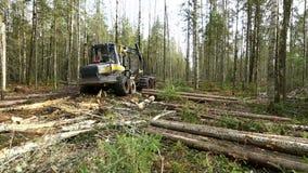 bosbouw Mening van registreerapparaatbewegingen door hout stock videobeelden
