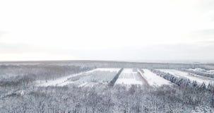 bosbouw Sneeuwbomen en tak in een mening van het landschap van de de winter bosdieWinter, bos, bomen met vorst worden behandeld stock video