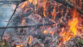Bosbrand, het gezicht van het branden van takken stock videobeelden