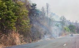 Bosbrandenkant van de weg Stock Afbeelding