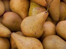Bosc pear Stock Image