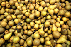 Bosc pears Royalty Free Stock Images