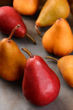 Bosc and Red Pears Closeup Stock Images