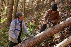 Boscaioli senior che tagliano gli alberi Immagine Stock