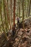 Boscaioli senior che tagliano gli alberi Fotografia Stock