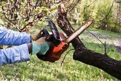 Boscaiolo che pota con una sega a catena Fotografia Stock Libera da Diritti