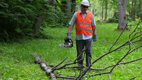 Boscaiolo con la motosega che cammina vicino al grande ramo di albero stock footage