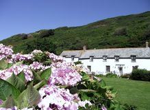 Boscastle: Cottages and Gardens. Row of fishermen cottages and gardens in coastal village of Boscastle, Cornwall, England. Colour image. Houses. Quaint living Royalty Free Stock Photos