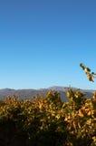boschendal виноградник Стоковое фото RF