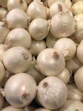 Boschetti dell'aglio Immagini Stock