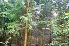 Boschetti della foresta Immagine Stock Libera da Diritti