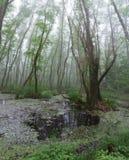 Boschetti della foresta Un folletto sta visitando Foresta del relitto, rosso dell'ontano Immagini Stock