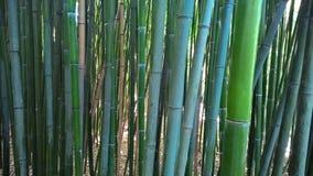 Boschetti di bambù Fotografia Stock Libera da Diritti