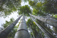 Boschetti di bambù (Kyoto, Giappone) Immagini Stock Libere da Diritti