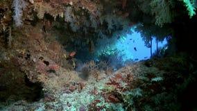 Boschetti di corallo molle variopinto sulla scogliera in oceano stock footage