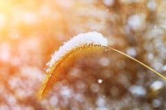 Boschetti di erba alta coperti da neve nel paesaggio urbano Fotografia Stock Libera da Diritti