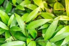 Boschetto ben illuminato con la colata gialla calda di luce solare sulle foglie verso la fine della sera Questa giovane pianta fr Immagine Stock