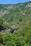 Boschetto Big Sur California della sequoia della foresta nazionale di cappellani di Los Fotografia Stock Libera da Diritti