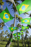 Boschetto brasiliano degli alberi del cocco della stamina della bandiera Fotografia Stock Libera da Diritti