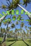 Boschetto brasiliano degli alberi del cocco della stamina della bandiera Fotografia Stock