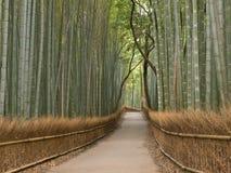 Boschetto del bambù di Kyoto Fotografia Stock Libera da Diritti