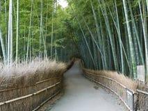 Boschetto del bambù di Kyoto Immagini Stock Libere da Diritti