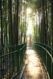 Boschetto del parco-bambù di autunno Fotografia Stock Libera da Diritti