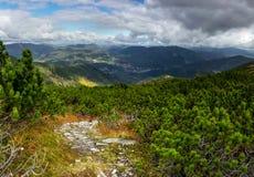Boschetto del pino montano Fotografie Stock