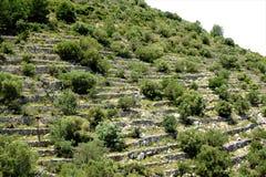 Boschetto dell'agrume e dell'oliva nella sierra del Penon Immagini Stock