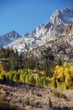 Boschetto dell'Aspen immagini stock libere da diritti