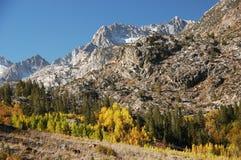 Boschetto dell'Aspen fotografia stock