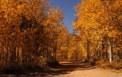 Boschetto dell'Aspen Fotografie Stock