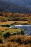 Boschetto dell'Aspen vicino al lago Fotografia Stock