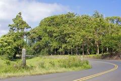 Boschetto dell'eucalyptus del Rainbow Fotografia Stock Libera da Diritti