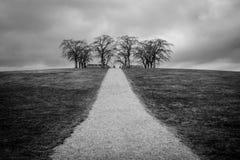 Boschetto dell'olmo al cimitero del terreno boscoso immagini stock libere da diritti