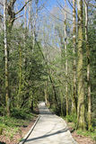 boschetto dell'Tasso-albero immagine stock