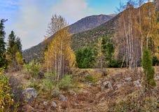 Boschetto della betulla davanti ai pendii di montagna immagine stock libera da diritti