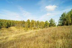 Boschetto della betulla nella stagione di autunno Immagini Stock Libere da Diritti
