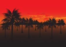 Boschetto della noce di cocco al tramonto Fotografia Stock