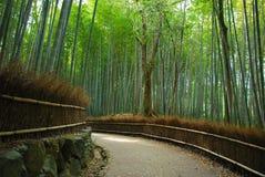 Boschetto di bambù Fotografia Stock