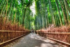 Boschetto di bambù di Arashiyama, HDR Immagini Stock