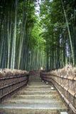 Boschetto di bambù a Kyoto fotografie stock