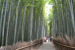 Boschetto di bambù a Kyoto, Giappone Fotografie Stock