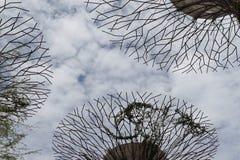 Boschetto di Supertree Fotografia Stock