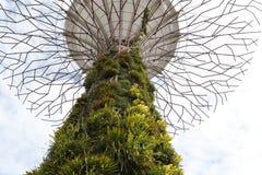 Boschetto di Supertree Fotografie Stock