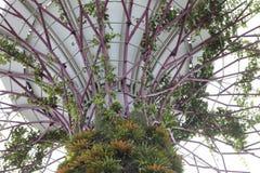 Boschetto di Supertree Fotografia Stock Libera da Diritti